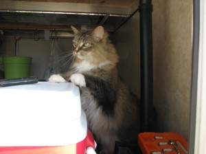 Chloe Cat exploring the RV garage...